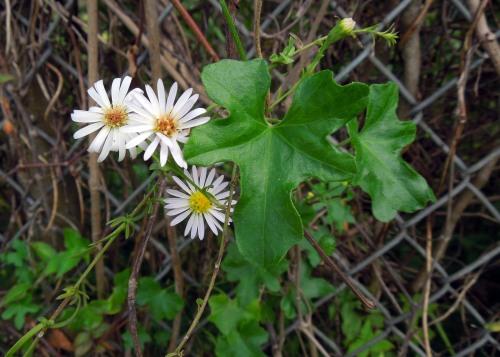 Tiny Flowers 02