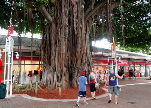 Miami37-Bayfront Tree