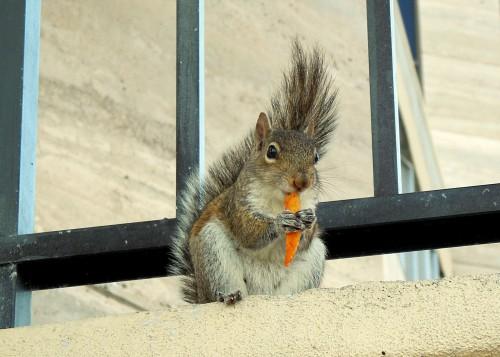 Squirrel02