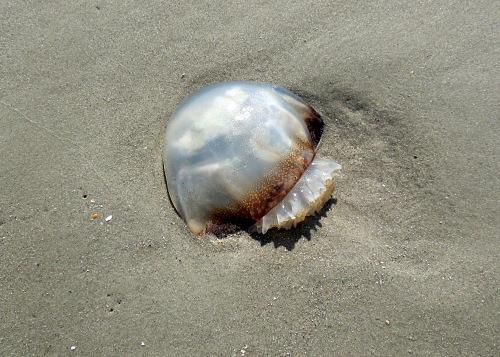 Myrtle Beach 67