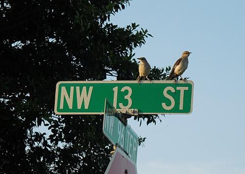 Birds on Street Sign 1