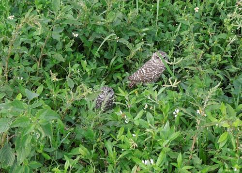 Overgrown Owl Burrow